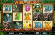 wild orient slot screen 1
